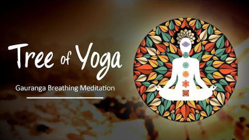 Tree of Yoga : Episode #1 - Gauranga Breathing Meditation | Science Of Identity Foundation